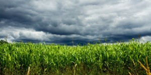 Are You Prepared? Crop Insurance Deadline is March 15, 2014