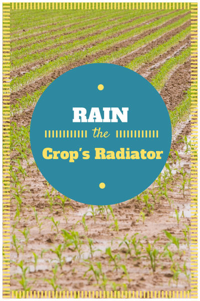 Rain - The Crop's Radiator